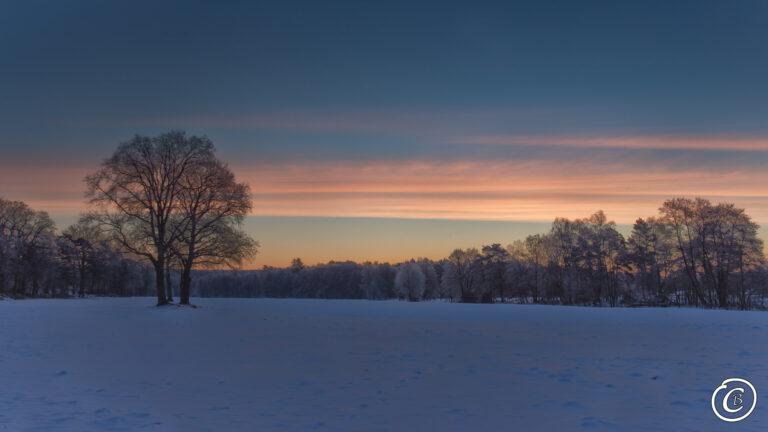 Winter in der Lüneburger Heide kurz vor Sonnenaufgang